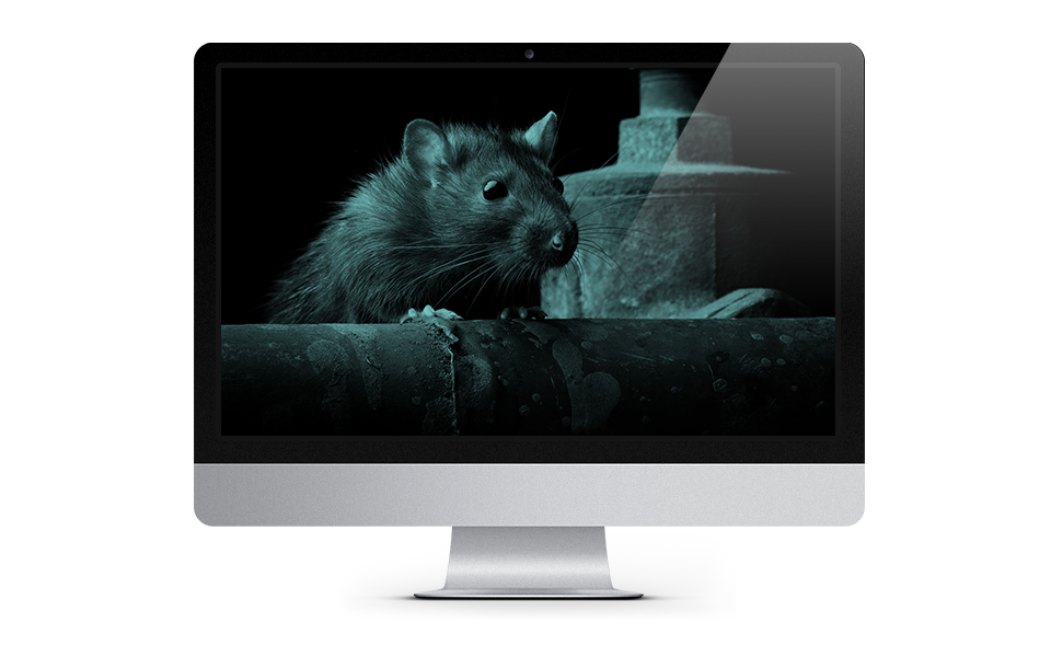 Rat Detection website